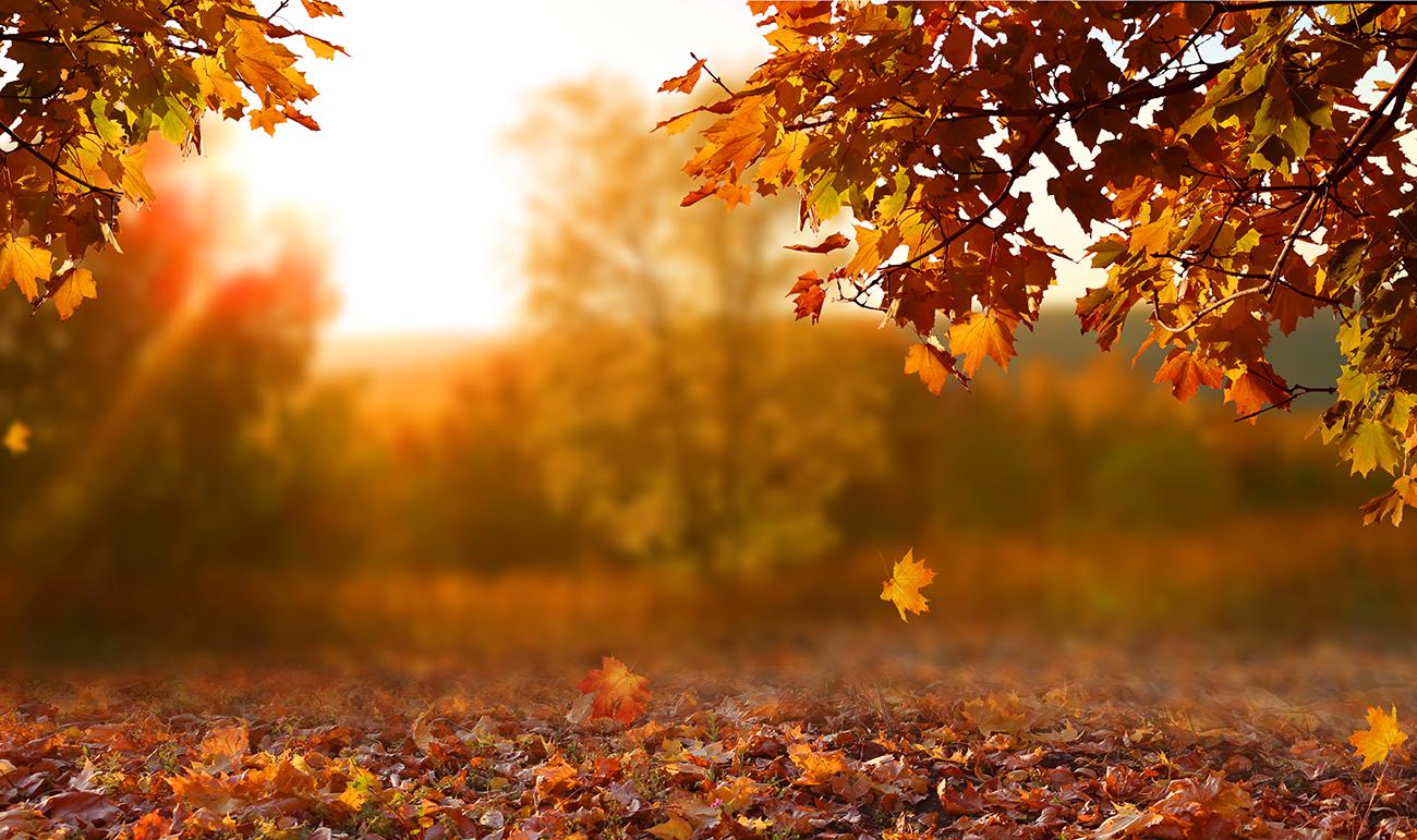 Fall Leaves Leave Em Recycle Ann Arbor